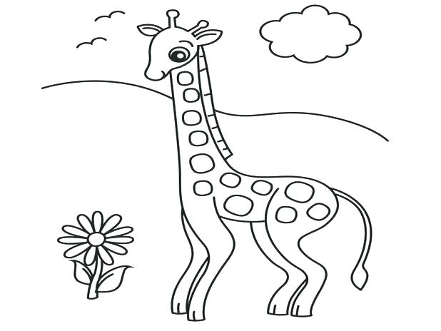 618x464 Giraffe Coloring Pages Giraffe Coloring Page Realistic Giraffe