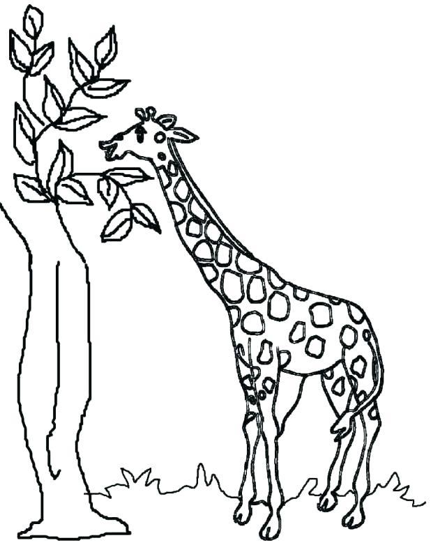 618x782 Giraffe Coloring Pages Giraffe Coloring Sheet Coloring Giraffe