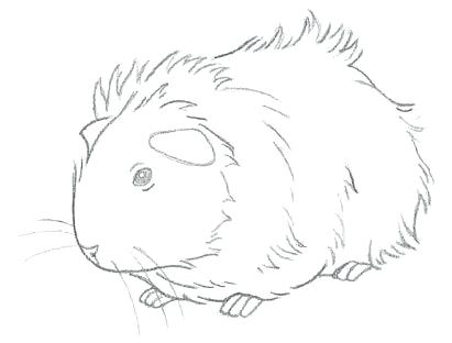 411x312 Guinea Pig Coloring Pages Baby Pig Coloring Pages Smiling Pig