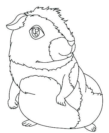 364x444 Guinea Pig Coloring Pages Guinea Pig Coloring Pages Guinea Pig