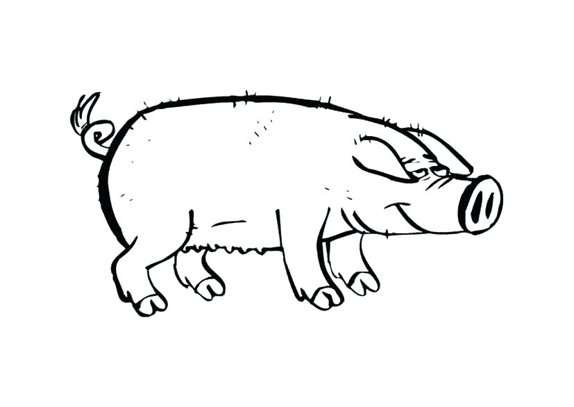 827x586 Realistic Guinea Pig Coloring Pages Pig Coloring Cute Pig Coloring
