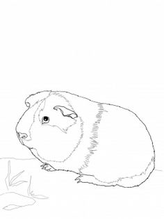 236x315 Top Free Printable Guinea Pig Coloring Pages Online Cavy