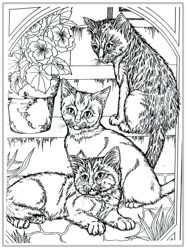 Realistic Kitten Coloring Pages at GetDrawings | Free download