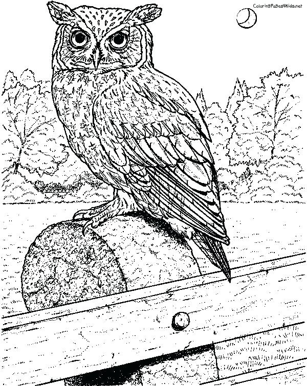 600x755 Great Horned Owl Coloring Page Realistic Bird Colouring Pages