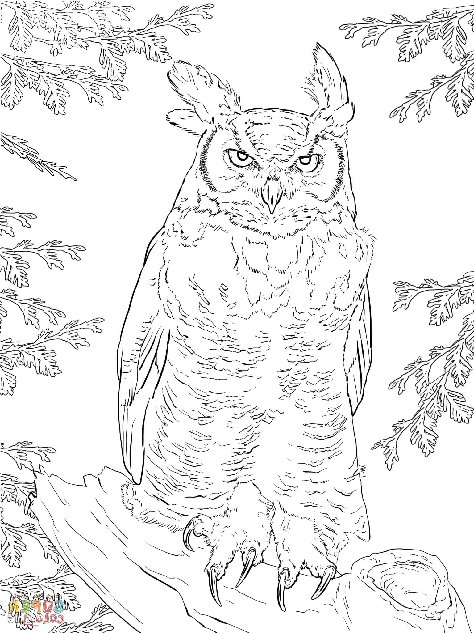 1536x2048 Great Horned Owl Coloring Page Realistic Great Horned Owl Coloring