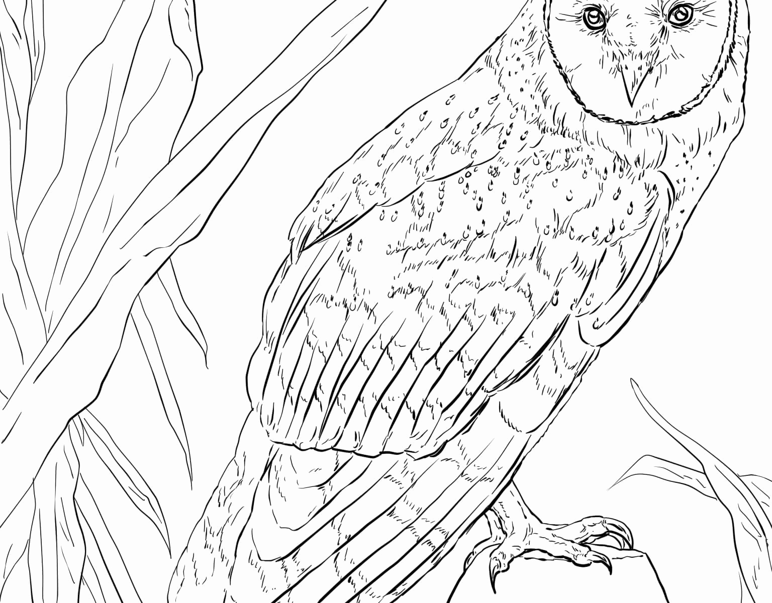 1536x1200 Barn Owl Coloring Page Free Coloring Sheets Sports Border Coloring