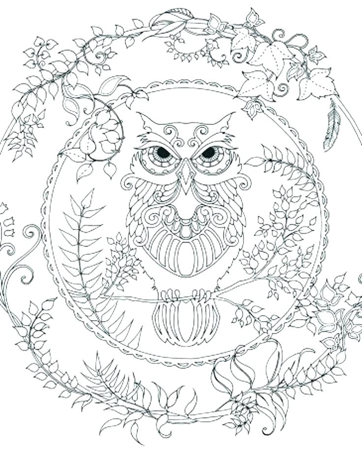 736x919 Realistic Adult Coloring Pages Printable Owl Adult Coloring