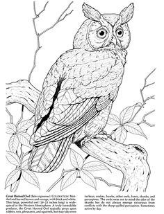 236x309 Realistic Owl Coloring Pages These Are Some Owl Coloring Pages