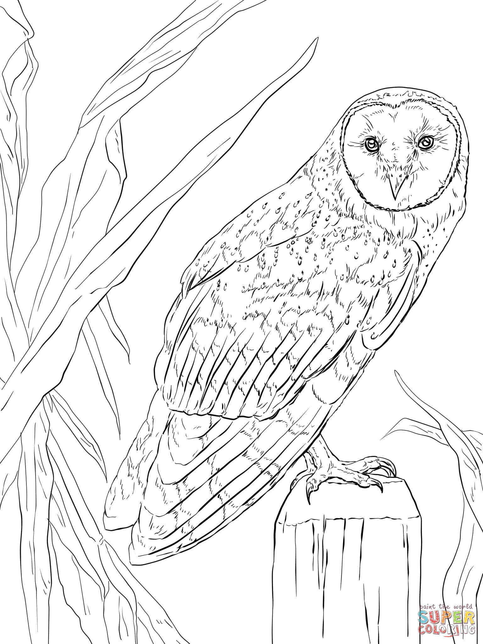1536x2048 Realistic Owl Coloring Pages Acpra