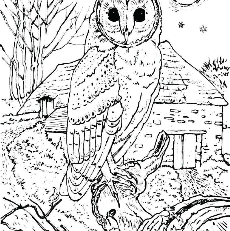 796x800 Barn Owl Coloring Page Realistic Barn Owl Coloring Pages Print