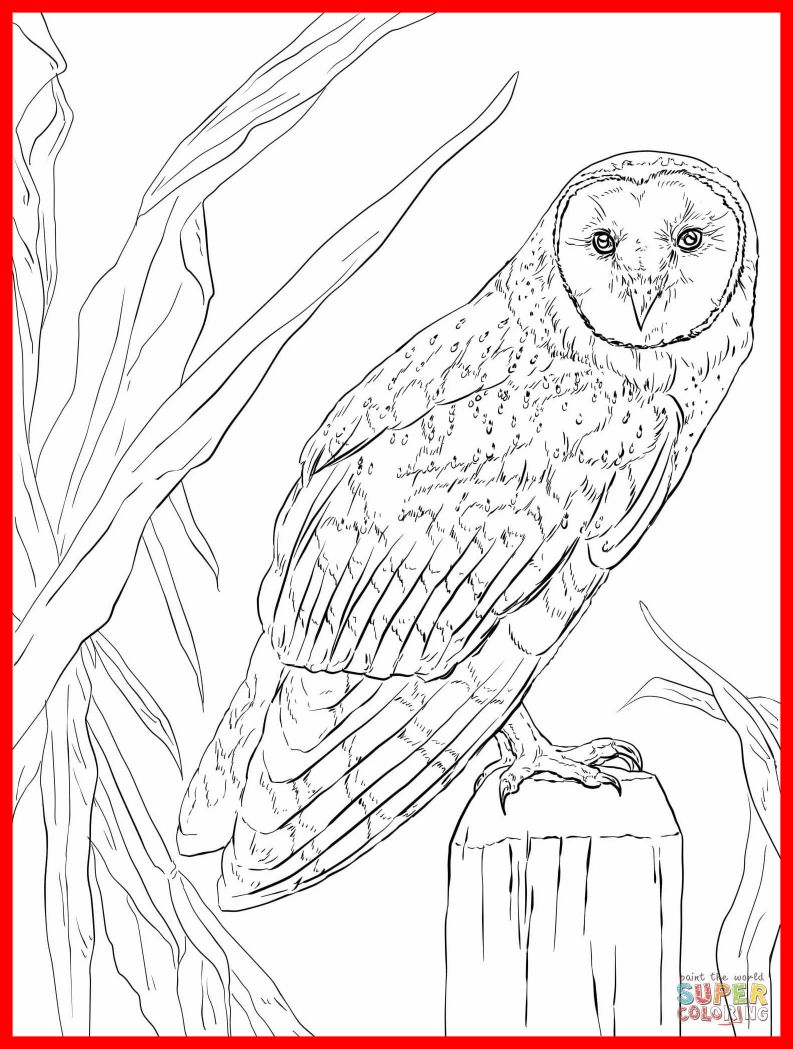 793x1049 Unbelievable Realistic Barn Owl Coloring Pages Print Animal Pic