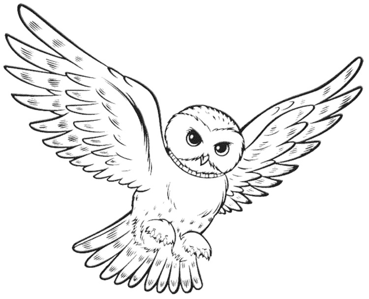 750x607 Realistic Owl Coloring Pages