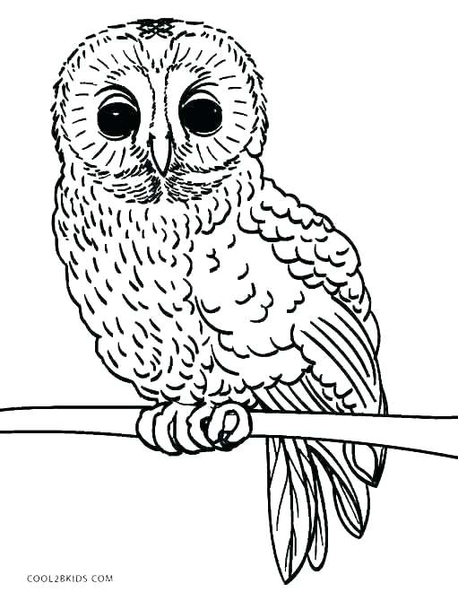 511x670 Cute Owl Coloring Pages Free Printable Owls Cute Owl Template