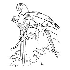 Realistic Parrot Coloring Pages