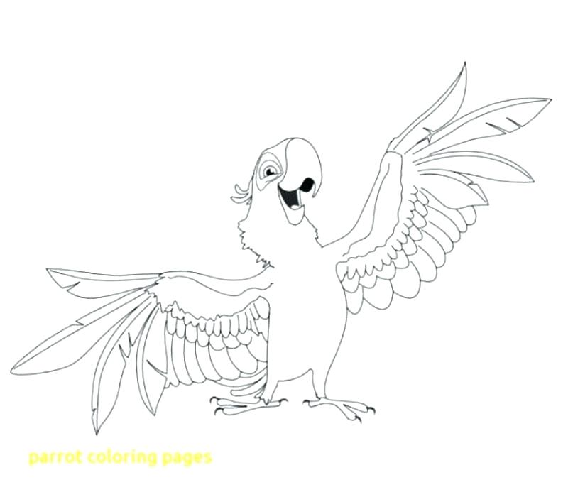 800x700 Parrot Coloring Page Parrot Coloring Page With Parrot Coloring