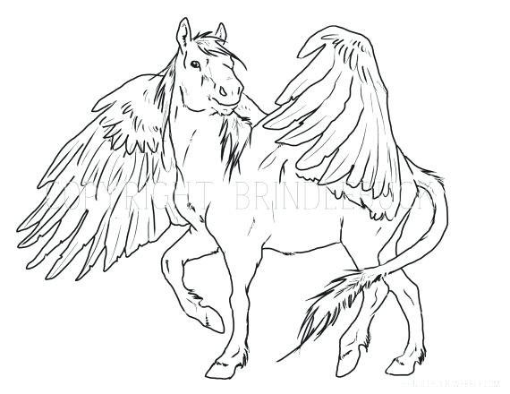 570x440 Pegasus Coloring Pages Top Coloring Pages Fee Unicorn Page Color