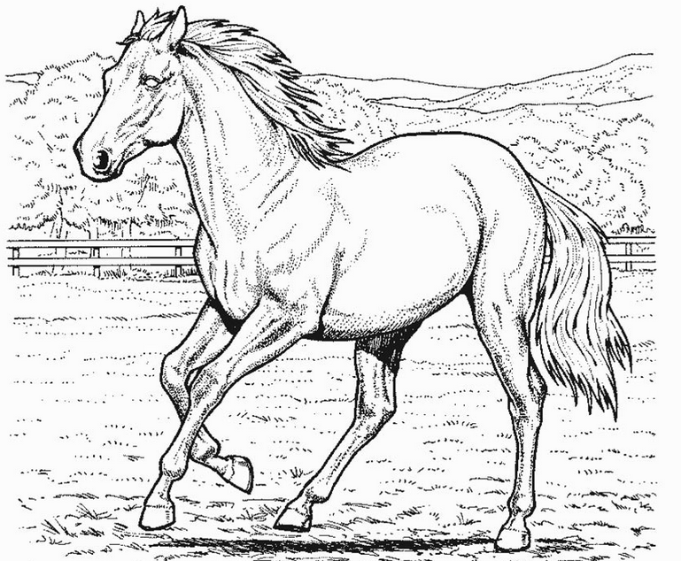 769x634 Realistic Horse Coloring Pages To Download And Print For Free