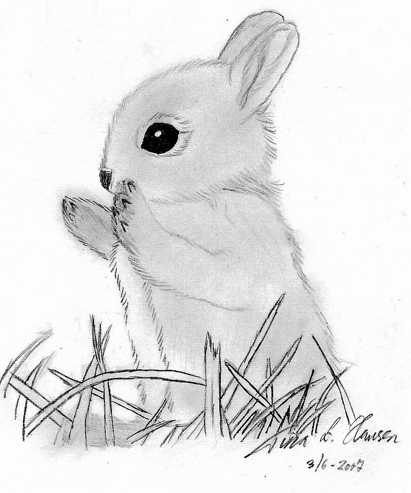 808x968 Drawn Rabbid Baby Bunny