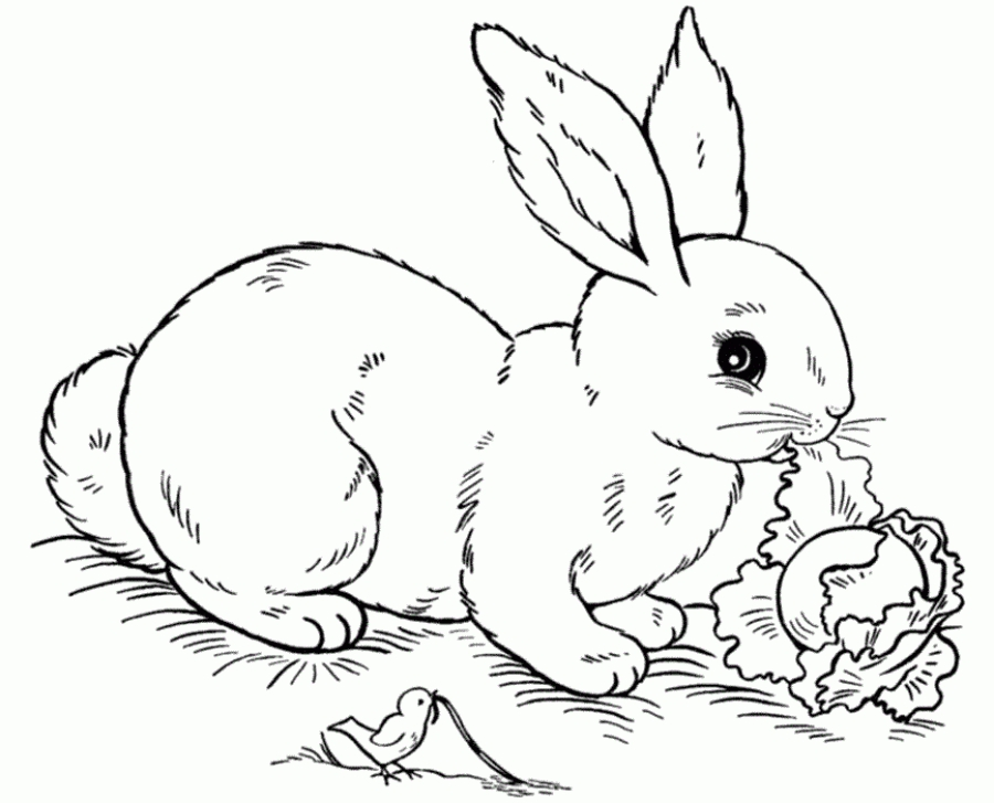 900x727 Realistic Bunny Coloring Pages