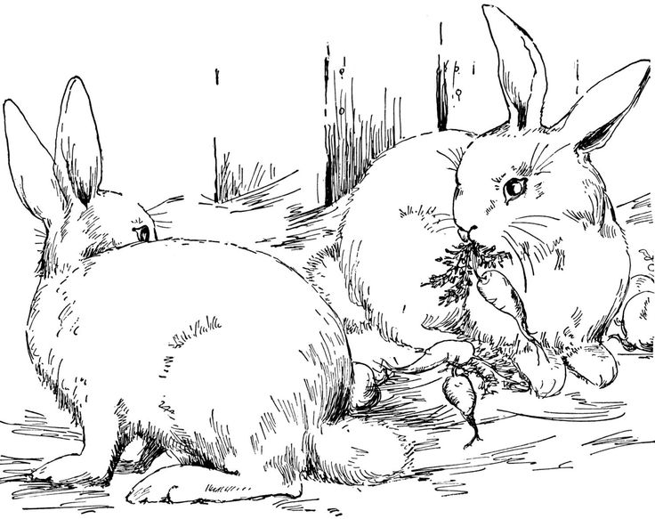 736x583 Rabbit Coloring Pages