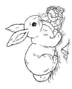 236x288 Realistic Rabbit Coloring Pages Bunnies Bunny
