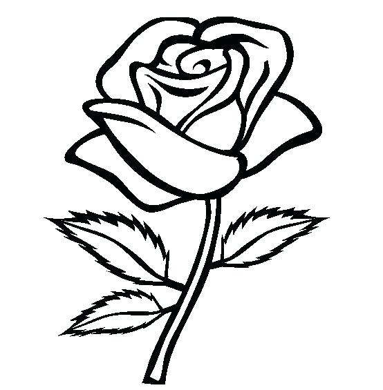 554x565 Realistic Flower Coloring Pages Realistic Coloring Pages Realistic