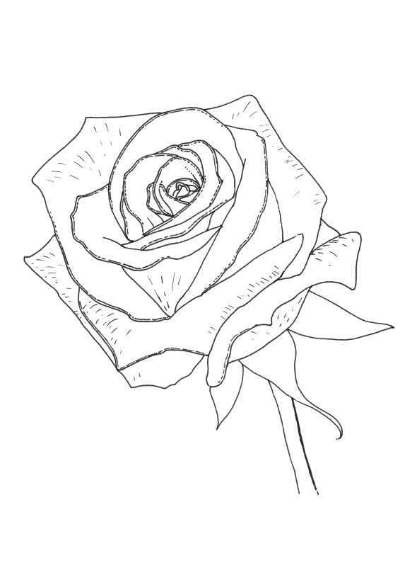 Realistic Rose Coloring Pages at GetDrawings.com | Free for personal ...