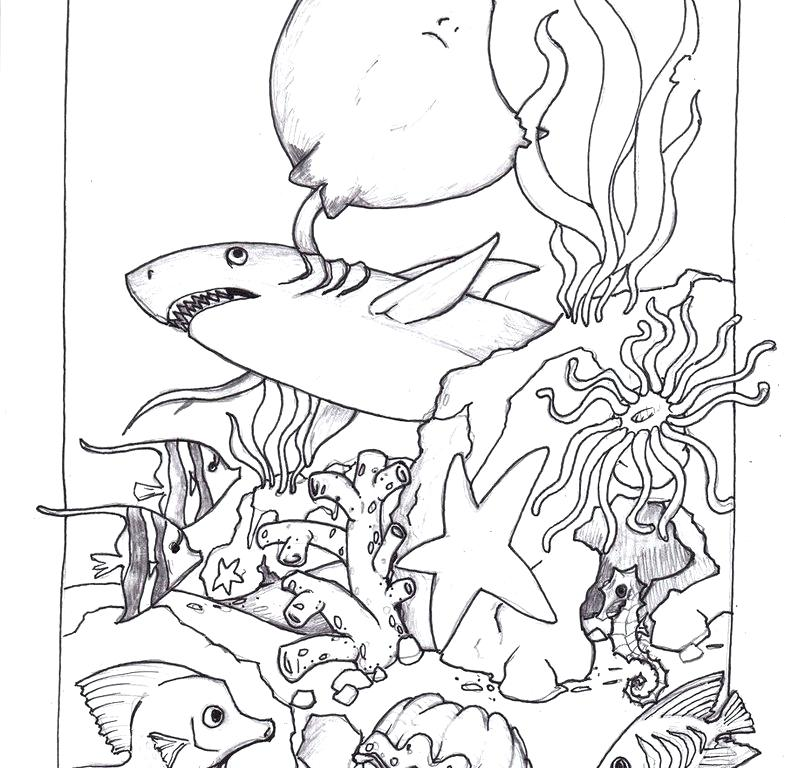 785x768 Ocean Life Coloring Pages Ocean Life Coloring Pages For Ocean