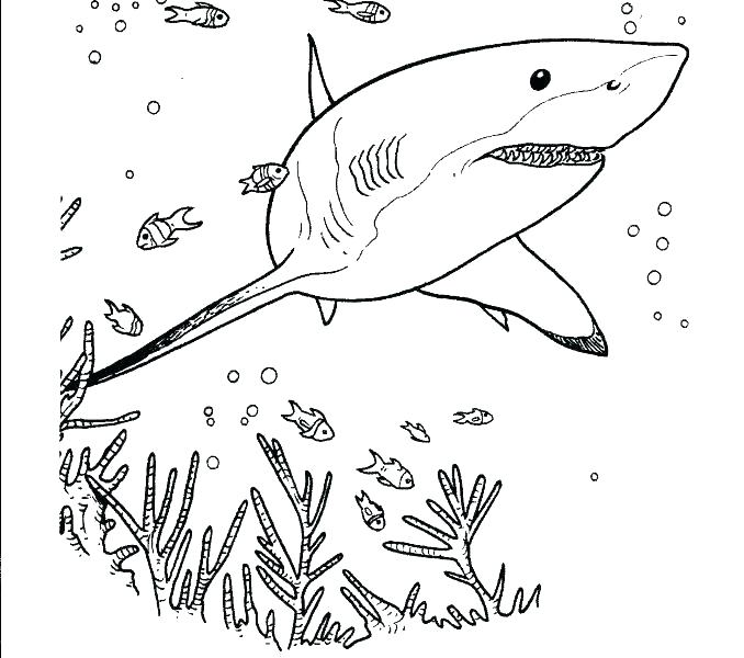 Realistic Shark Coloring Pages At Getdrawings Com Free For