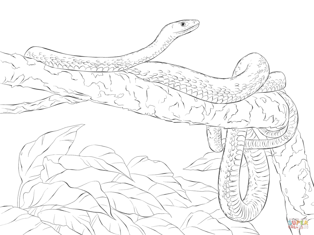 1024x768 Eastern Green Mamba Tree Download Coloring Pages
