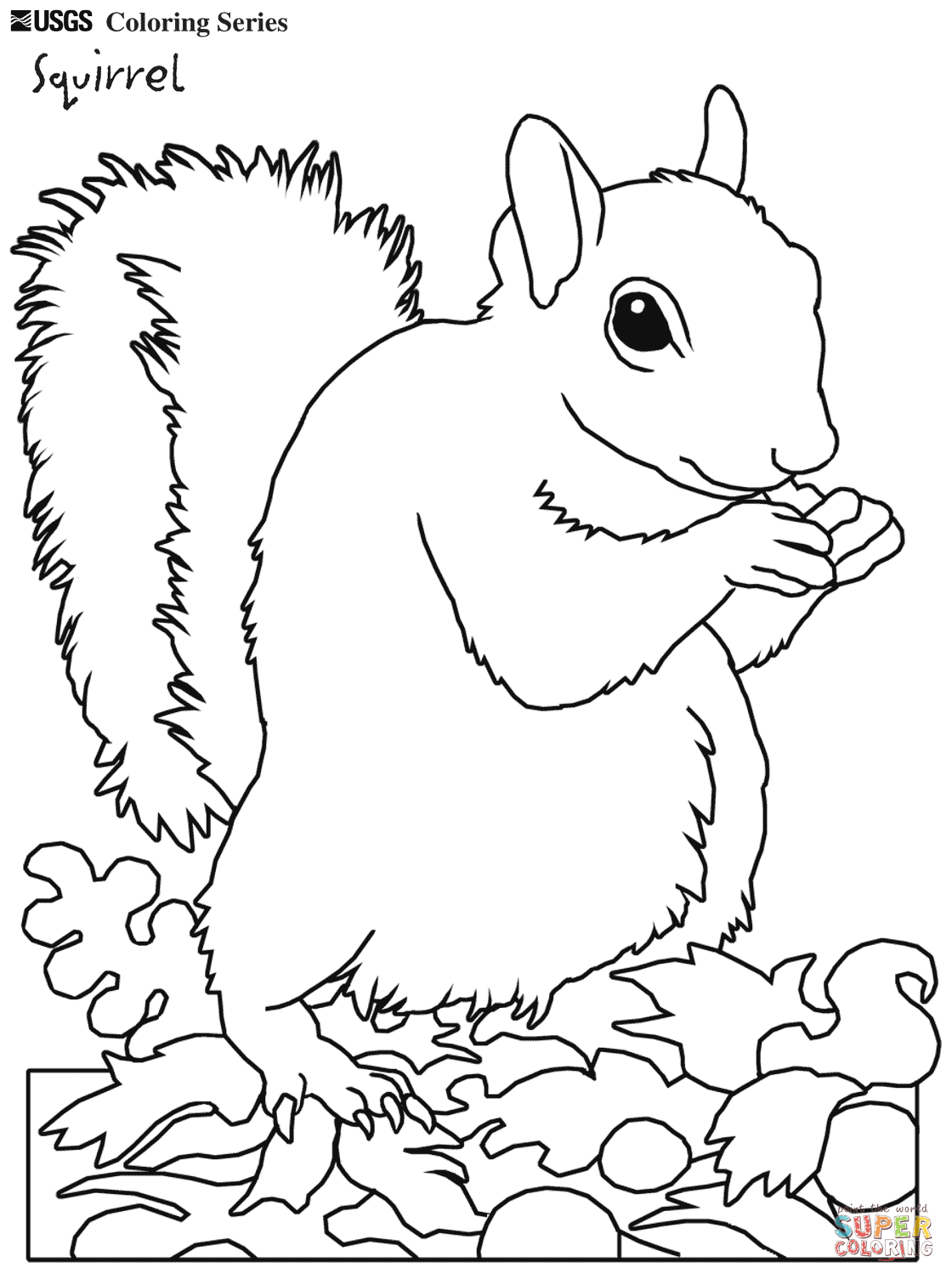 1120x1505 Eastern Grey Squirrel Tree Coloring Pages And Realistic