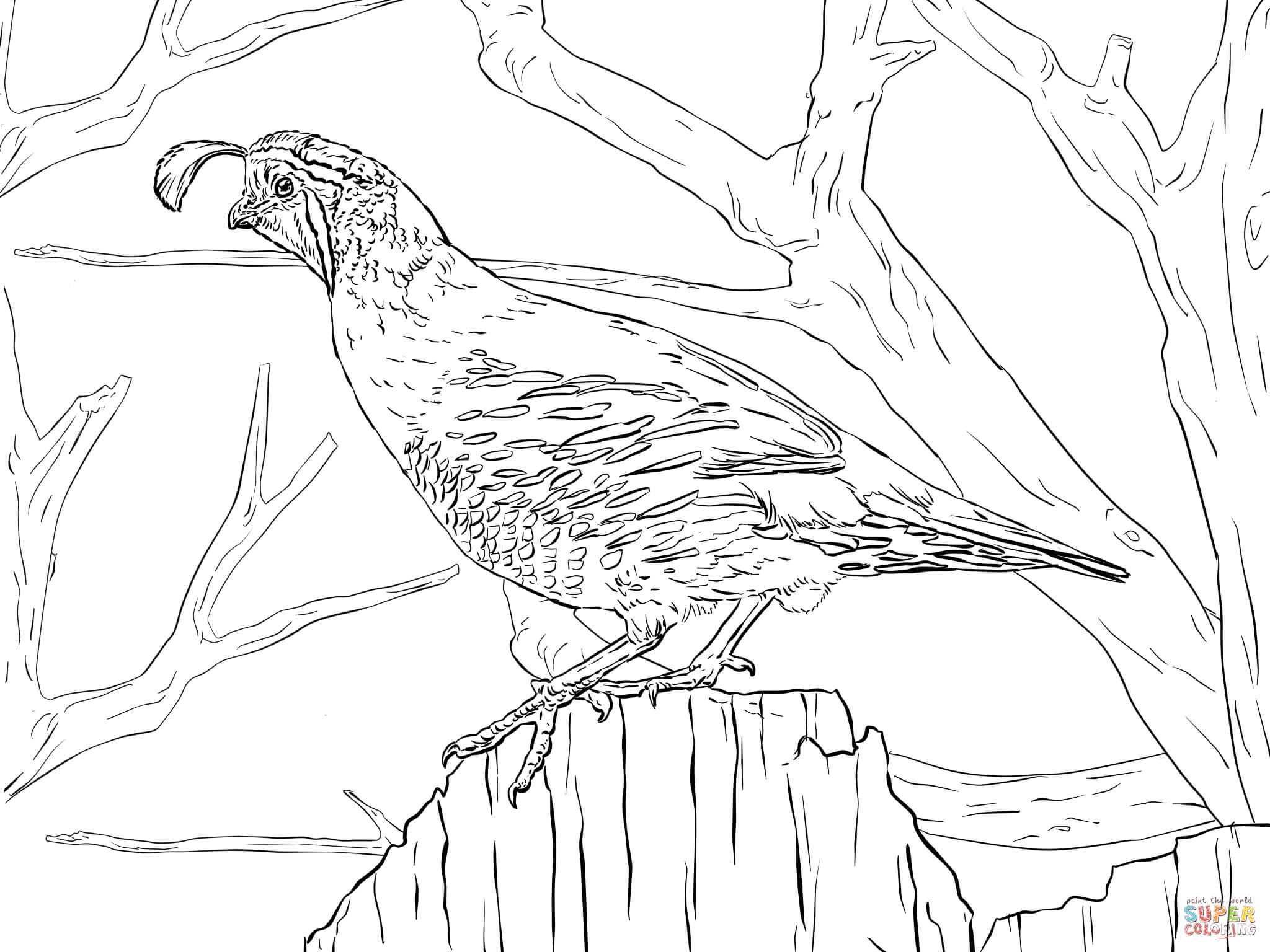 2048x1536 Fresh Coloring Pages Birds Realistic Best Of Realistic Tree