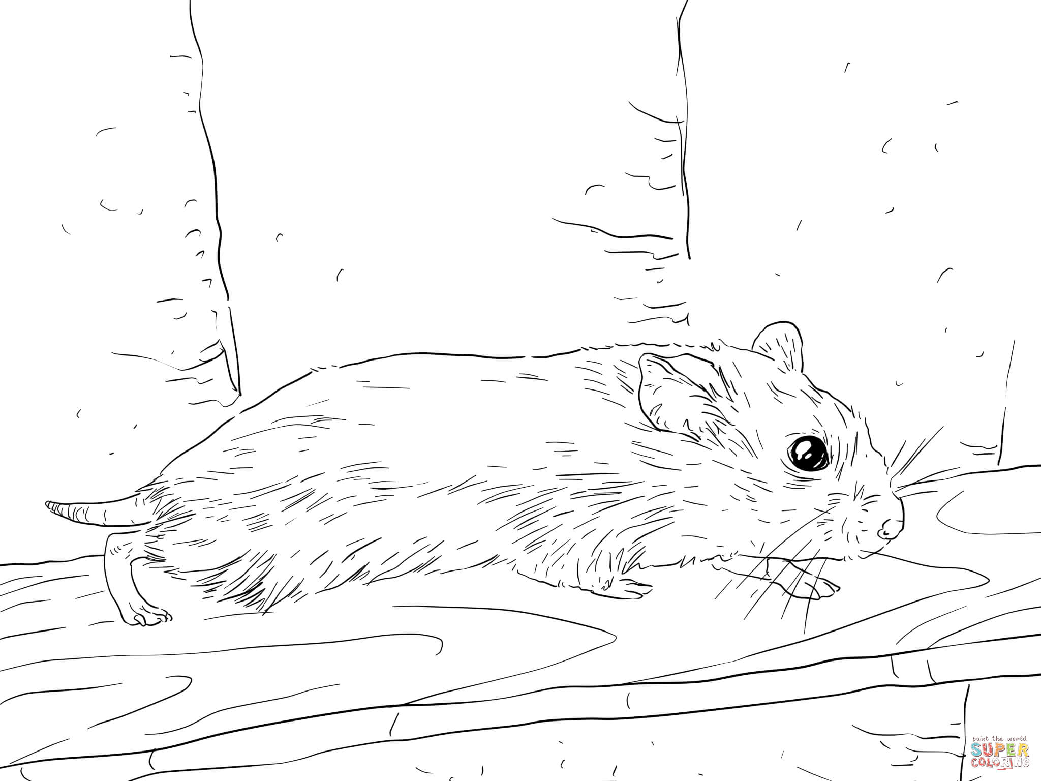 2048x1536 Hamster Coloring Pages Realistic Cute Sheets Humphrey Colouring