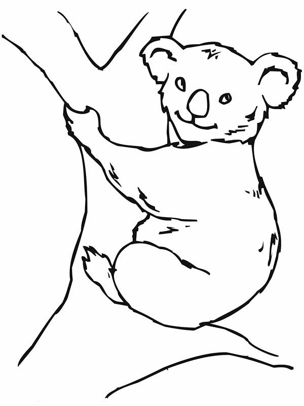 600x800 Koala Bear On Big Tree Coloring Page Color Luna