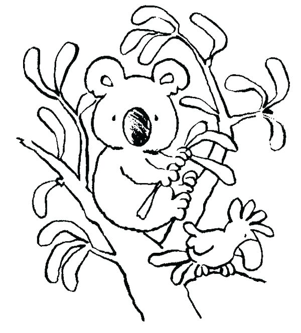 600x664 Koala Coloring Page Koala Bear On Big Tree Coloring Page Baby