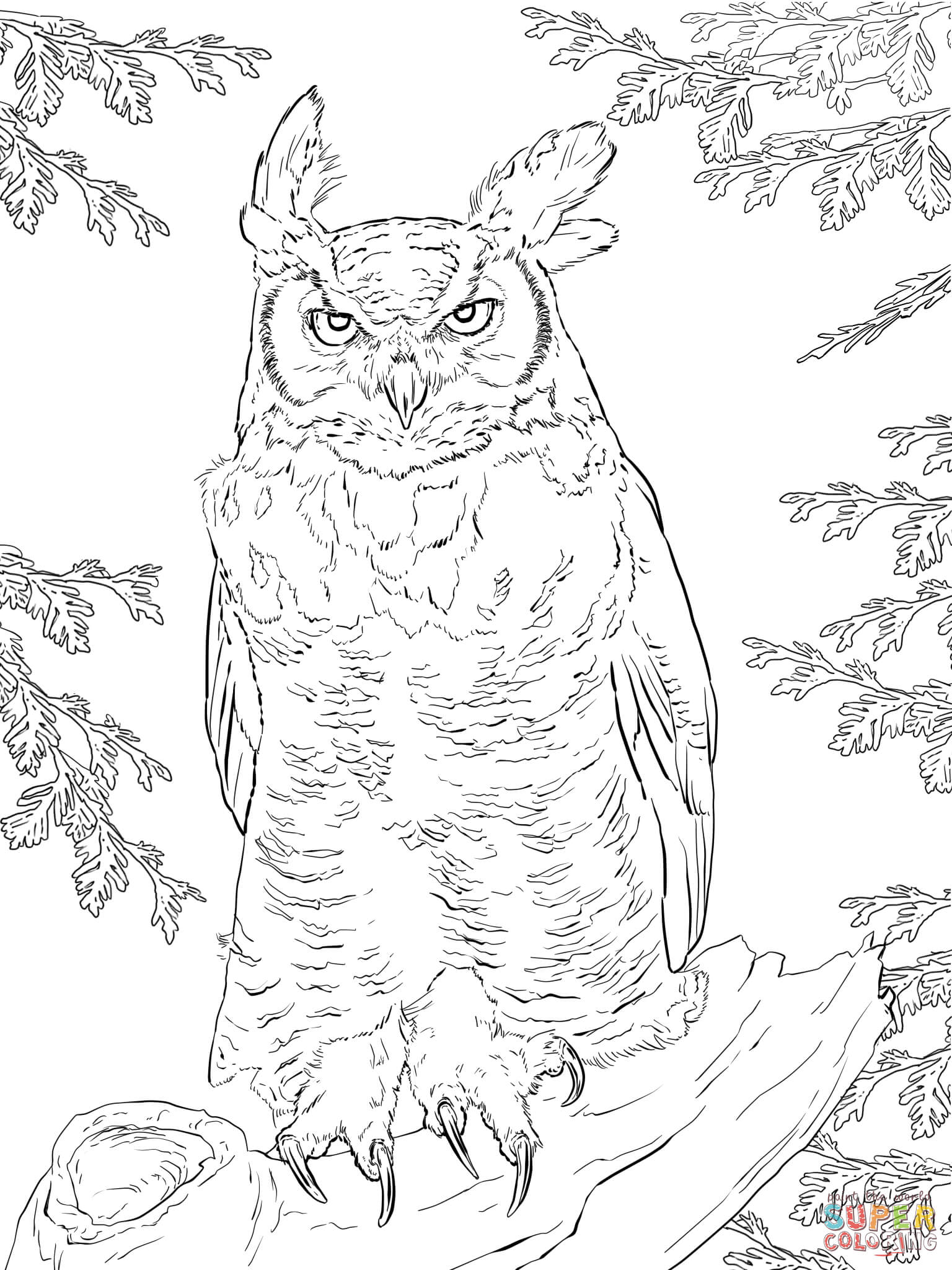 1536x2048 Opportunities Great Horned Owl Coloring Page W