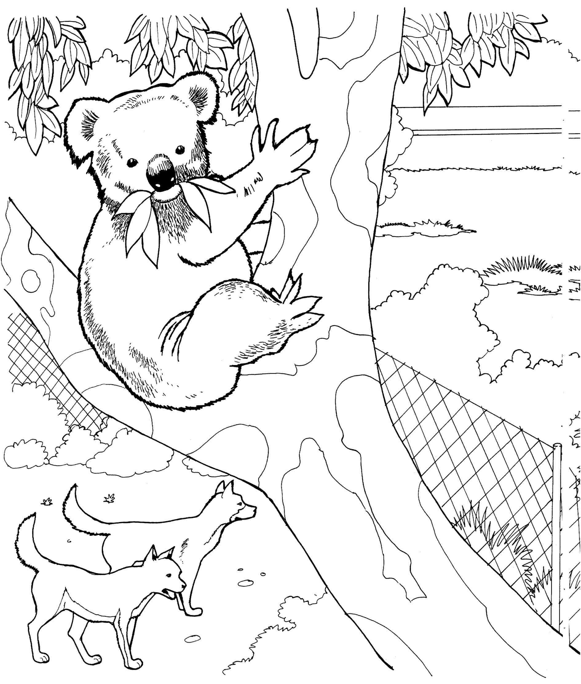 1890x2226 Realistic Koala Coloring Pages Online Coloring Printable