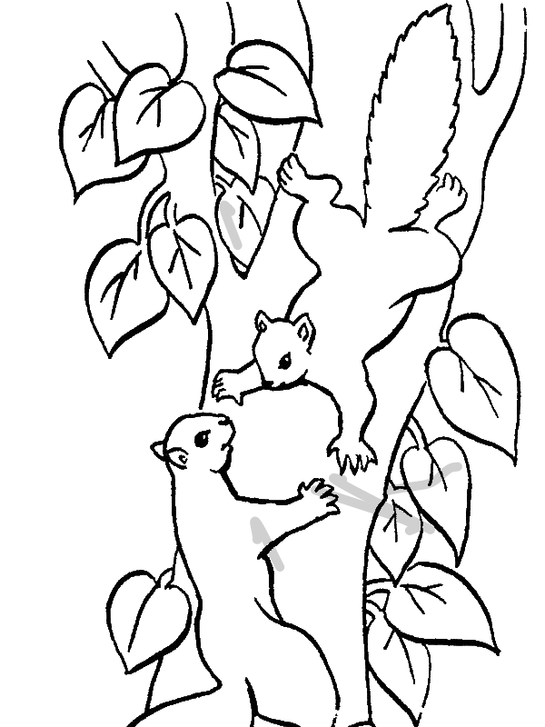 600x800 Squirrel Climbing Tree Coloring Page