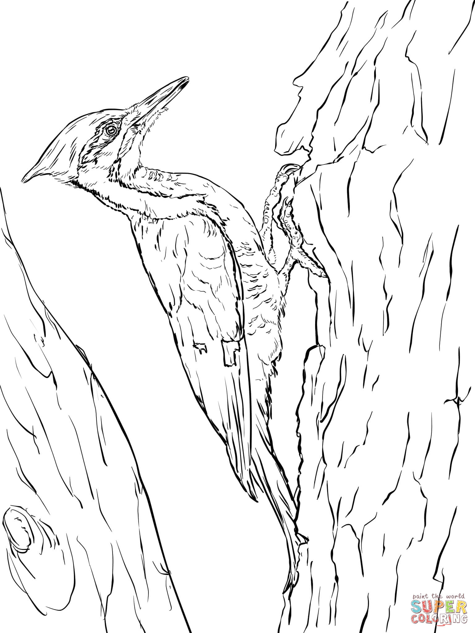 1536x2048 Survival Downy Woodpecker Coloring Page Hairy