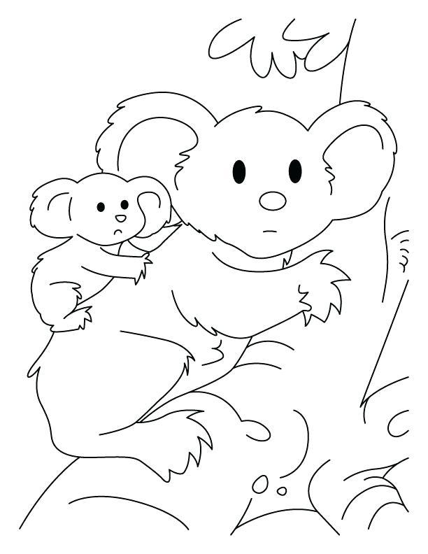 612x792 Wonderful Koala Bear Coloring Page Koala Bear Hanging On Tree