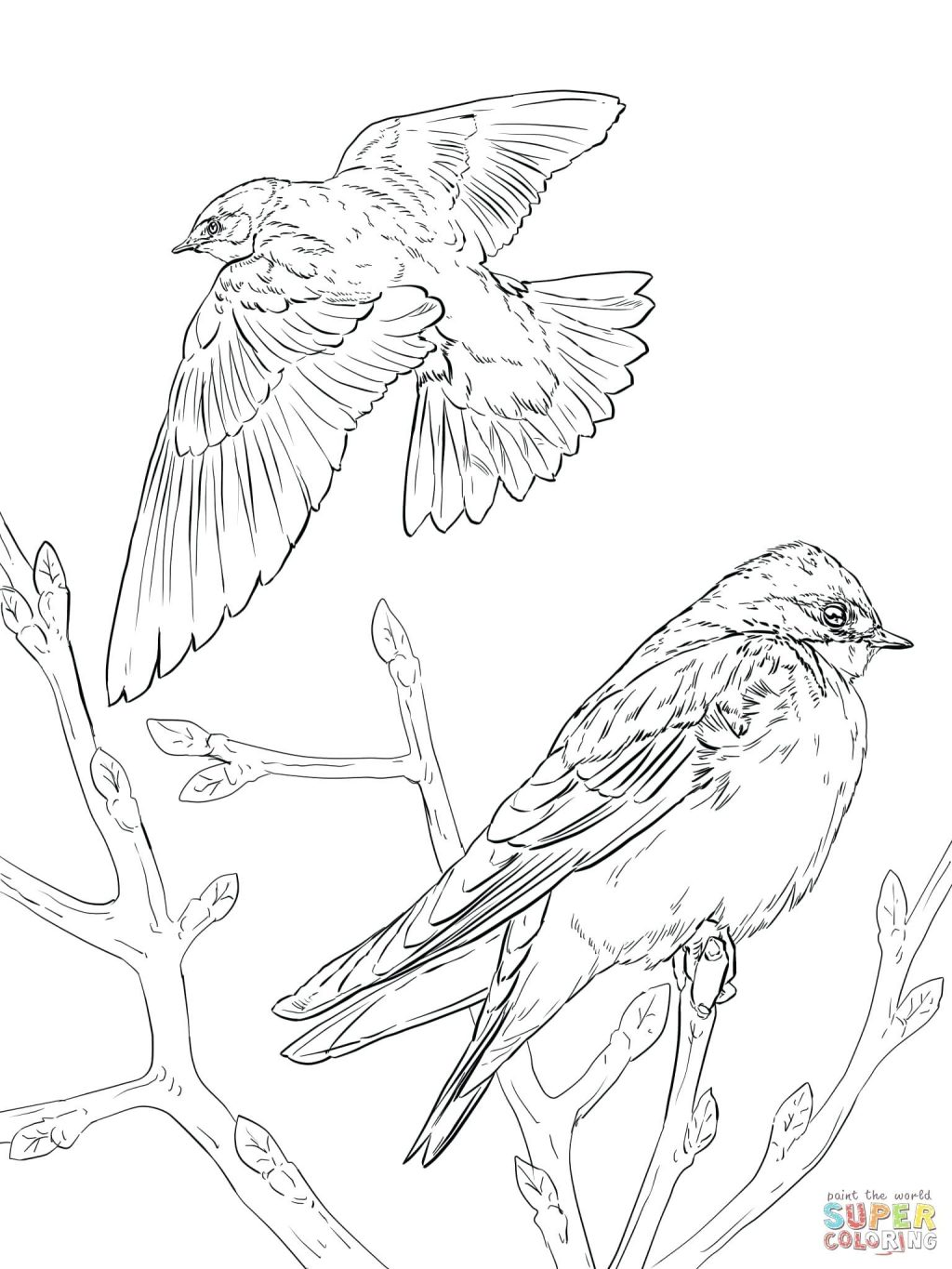 1024x1365 Coloring Page Goose Coloring Page Realistic Tree Swallows