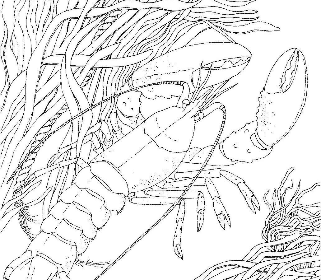 1032x900 Crayfish Coloring Page Free Printable Realistic Crawfish