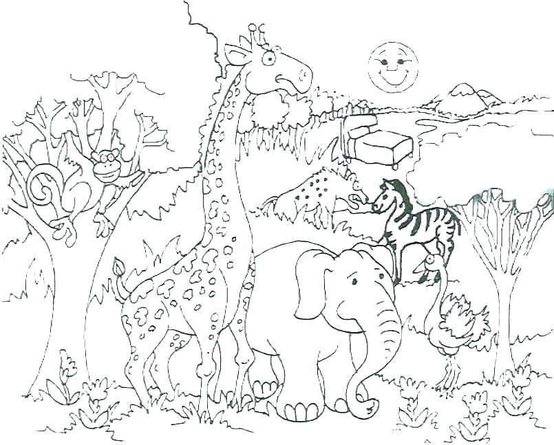 805x647 Wild Animal Coloring Pages Animal Coloring Pages Wild Animal