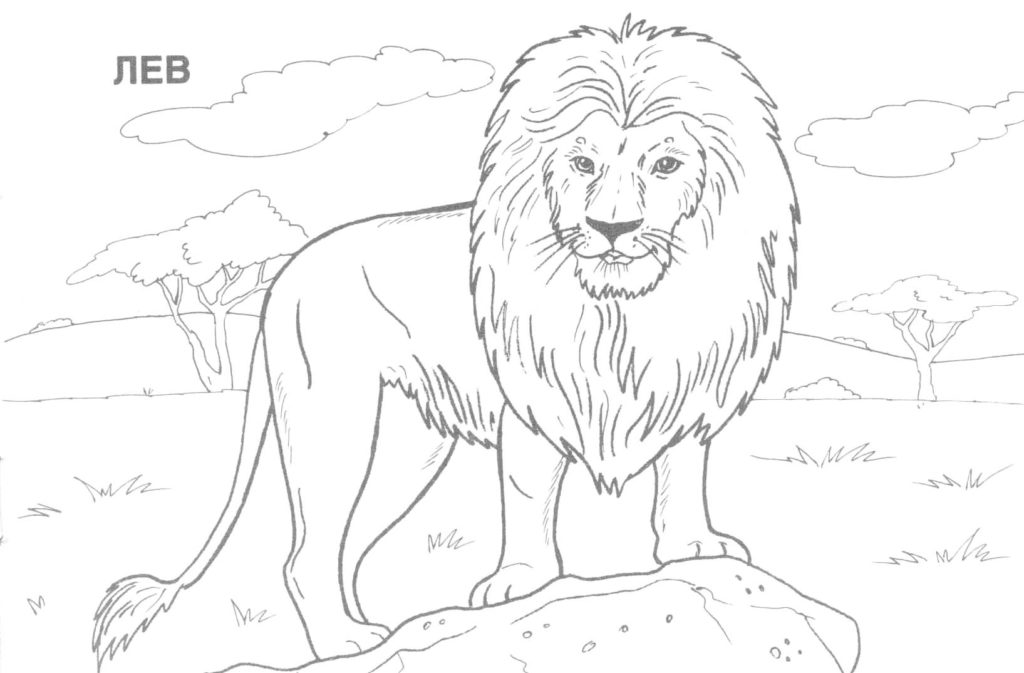 Wildlife Drawing at GetDrawings.com | Free for personal use Wildlife ...