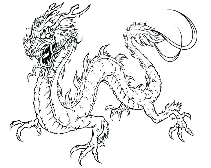 728x582 Realistic Animal Coloring Pages As Well As Realistic Coloring