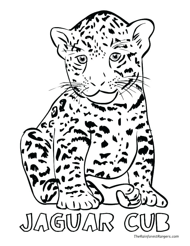 728x942 Realistic Animal Coloring Pages Realistic Animal Coloring Pages