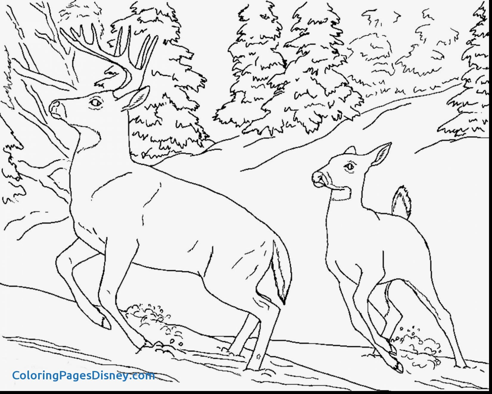 1650x1320 Realistic Animals Coloring Pages Elegant Realistic Animal Coloring