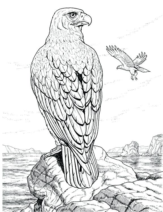 575x745 Wildlife Coloring Pages Detailed Coloring Pages For Adults