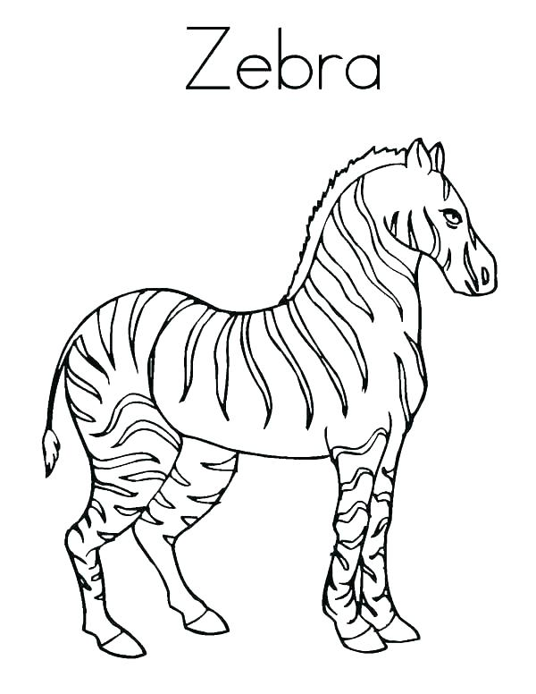 600x776 Zebra Coloring Clipart Printable Coloring Cute Zebra Coloring