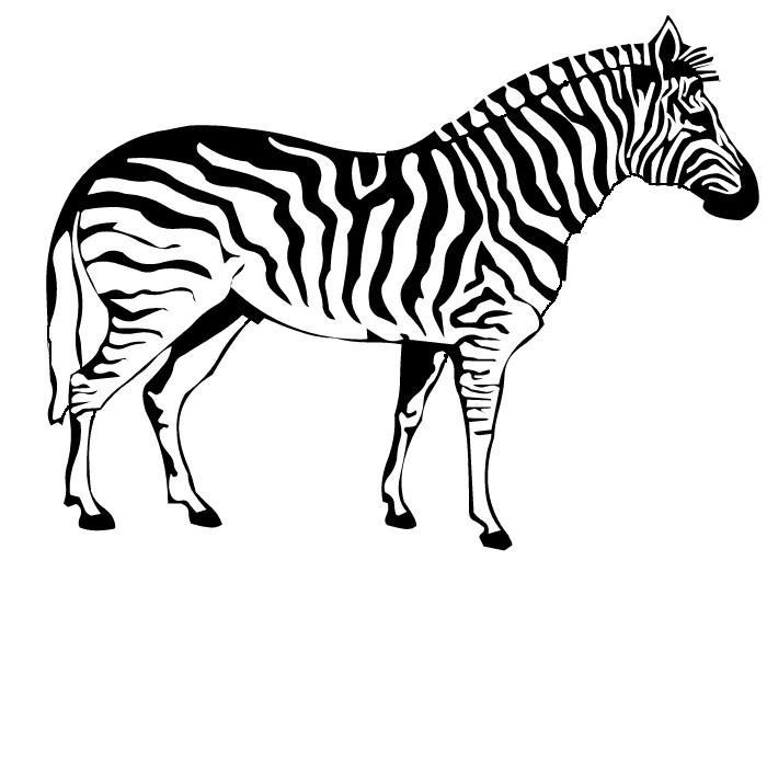 700x700 Zebra Coloring Page